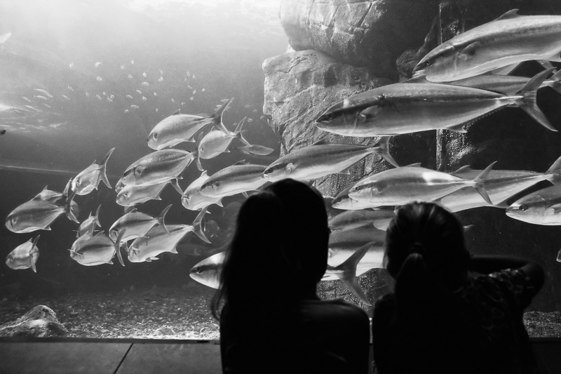 Two Oceans Aquarium / Cape Town / South Africa